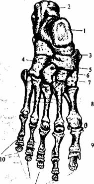 oasele degetelor