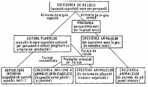 STRUCTURA ECOSISTEMELOR AMENAJATE DE TIP AGRICOL