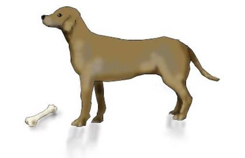 Animale De Recunoscut Care Incep Cu Litera Specificata