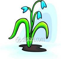 Proiect Tematic Flori De Primavara Grupa Pregatitoare