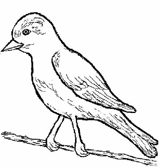 Planse de colorat pasari - Un oiseau dessin ...