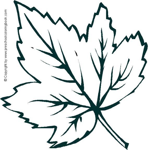 Planse cu tomana frunze ghinda etc for Arboles que no pierden sus hojas en otono