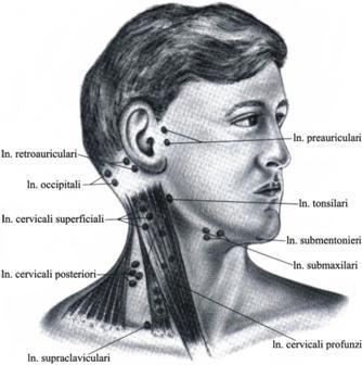 glanda tiroida poze