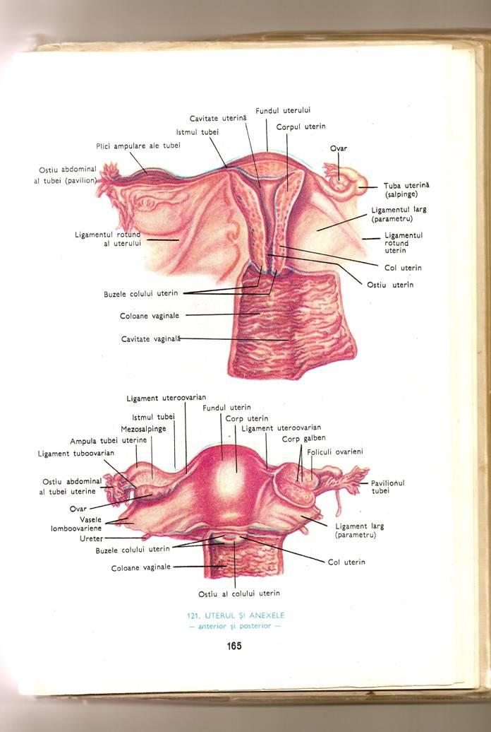 Sarcina Extrauterina Poze Cap.3 Sarcina Extrauterină